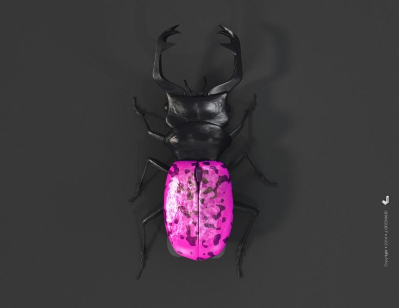 insectes-3D